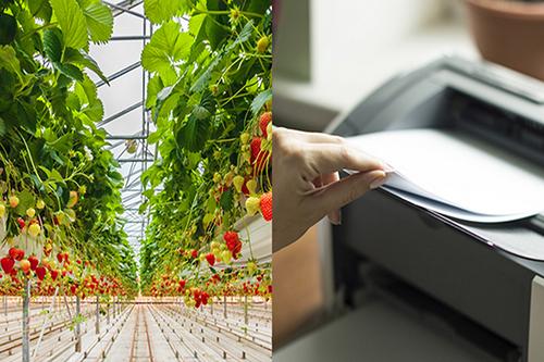 Čo majú jahody spoločné s tonerom do tlačiarne?