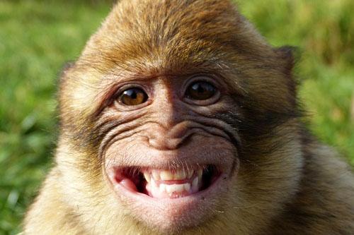 Nie je zlé byť primátom so suchým nosom