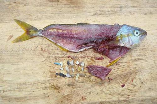 Plastová planéta a plasty v potravinovom reťazci