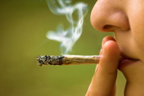 Cannabis sativa alias marihuana - časť. 2