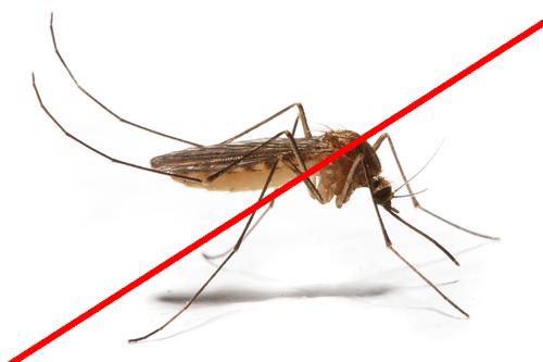Bez komárov a bez chémie ?