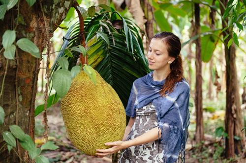 Chlebovník (Jackfruit) - Najväčšie ovocie na svete