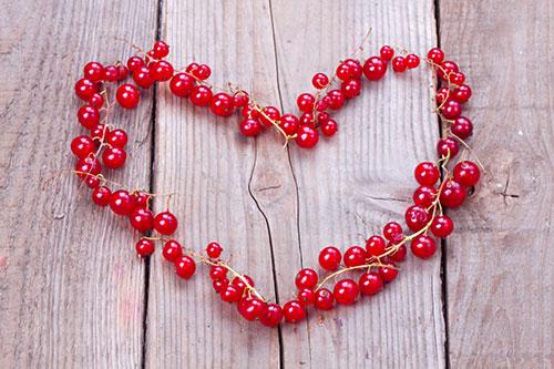 Srdce - vládca orgánov