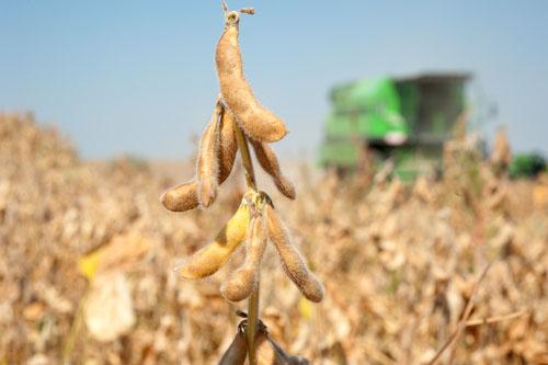 Geneticky modifikované organizmy (GMO) 2. časť