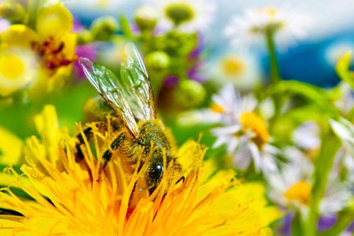 Med a peľ - prírodné antioxidanty a proteíny