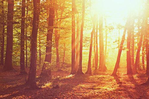 Natankovanie slnka na sklonku leta