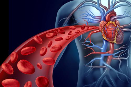 Zdravé srdce a cievy